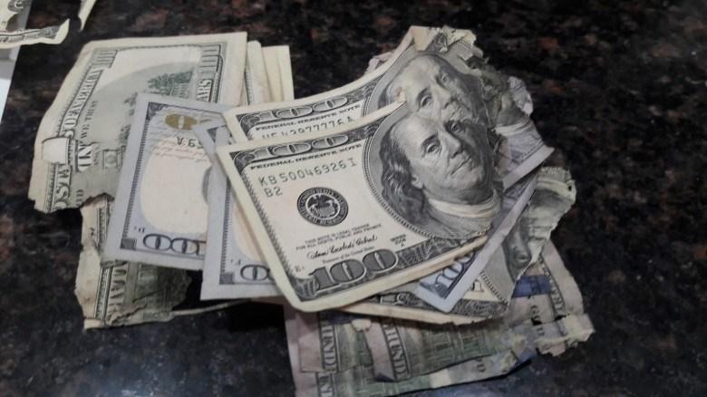 فأر يقضم مبلغ 50 ألف دولار في خان يونس