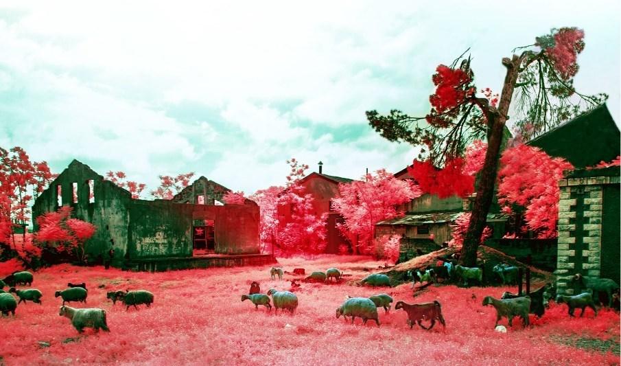 """""""إيلي كمال"""" يرسم بالكاميرا أجمل اللوحات التشكيلية"""