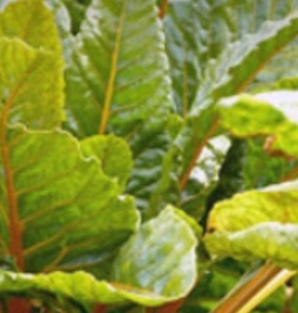 الأعشاب البرية ودورها في مقاومة الحصار والتهجير