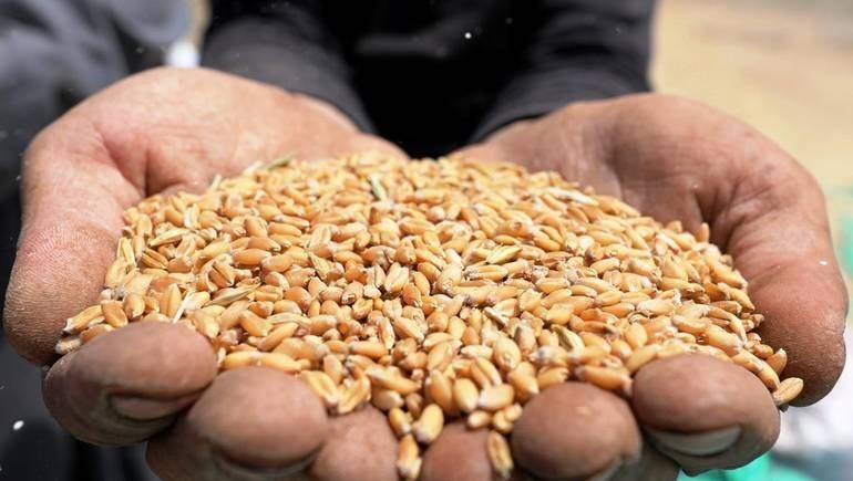 المؤسسة السورية لتخزين الحبوب تطلب شراء 200 ألف طن من القمح من روسيا لتصنيع الخبز