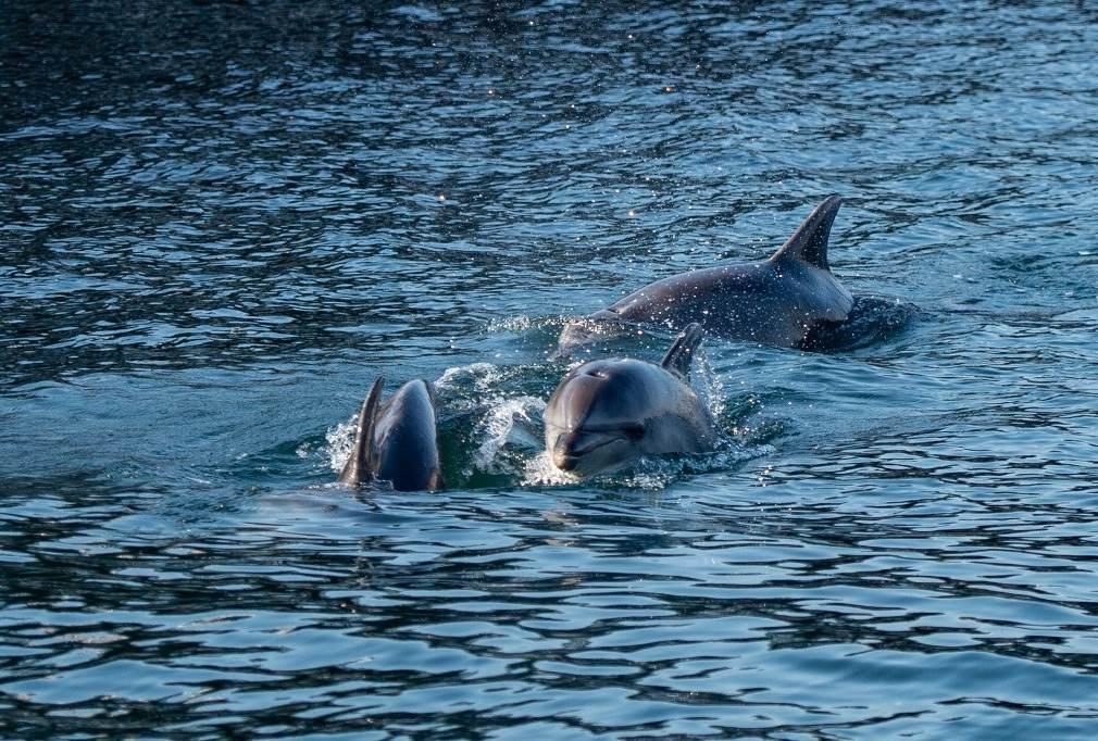 حذّر علماء بيئيون من تأثير تلوث البحار على انقراض بعض الحيوانات (أ ف ب)