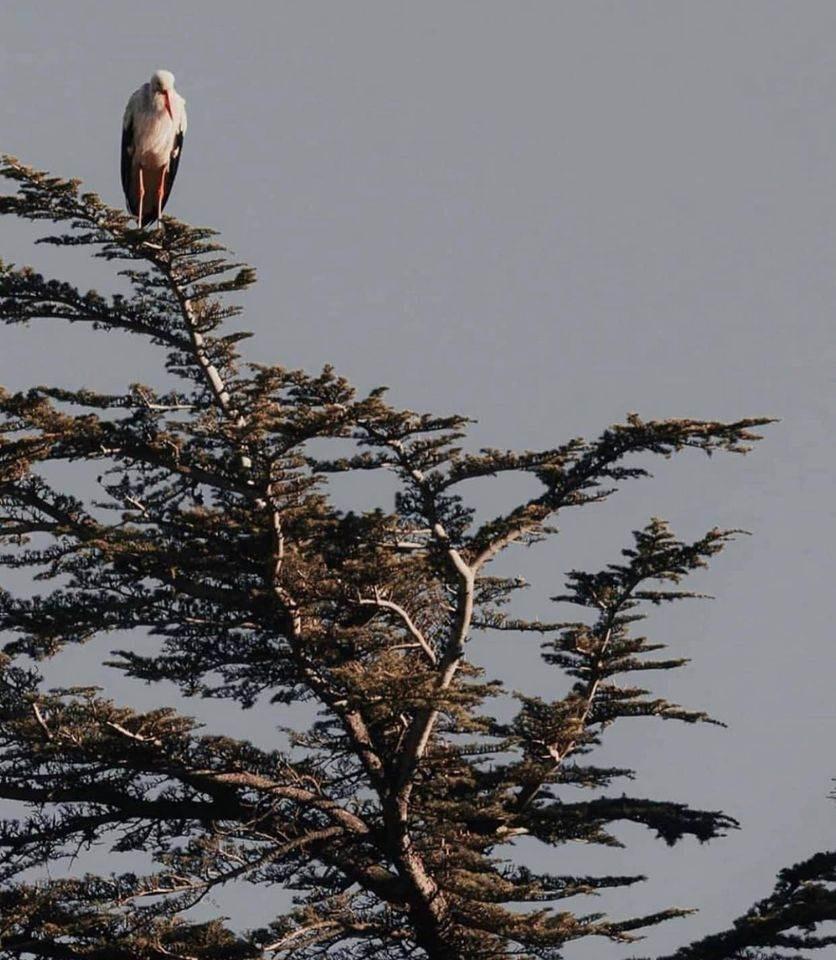 هجرة الطيور.. وأسرار اللقلاق المدهشة