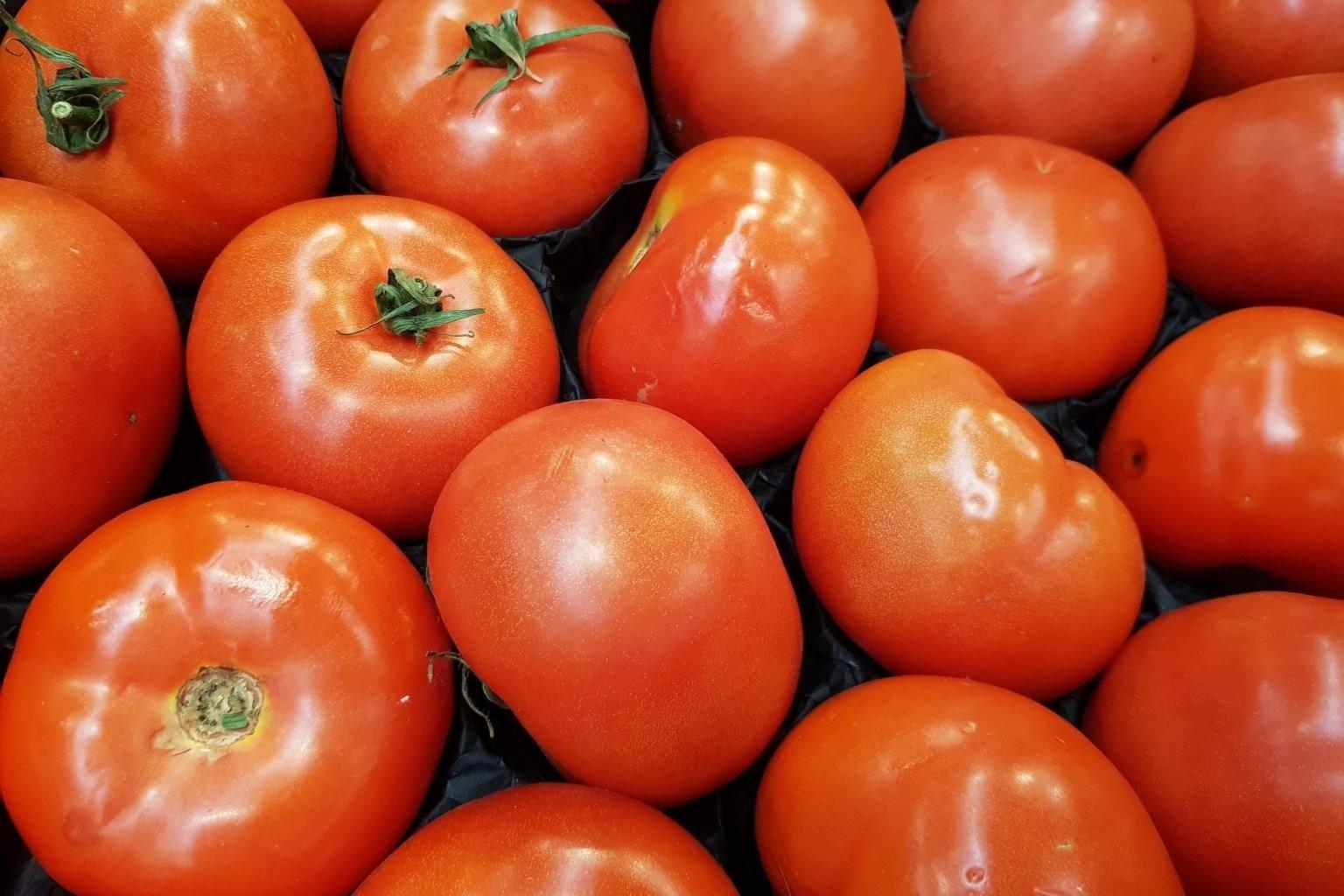 الدراسة هي الأولى التي تبحث في آثار تناول الطماطم أو منتجات الطماطم.