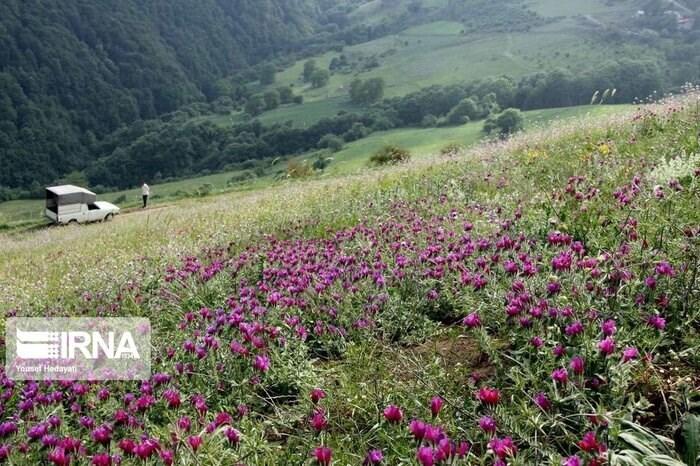 تتم زراعة نباتات تحتاج الى كميات قليلة من الماء مثل الكمون والزعفران والخفنج في أصفهان