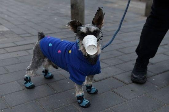 خبراء يشتبهون بإصابة كلب بكورونا بعدوى من مالكه في هونغ كونغ
