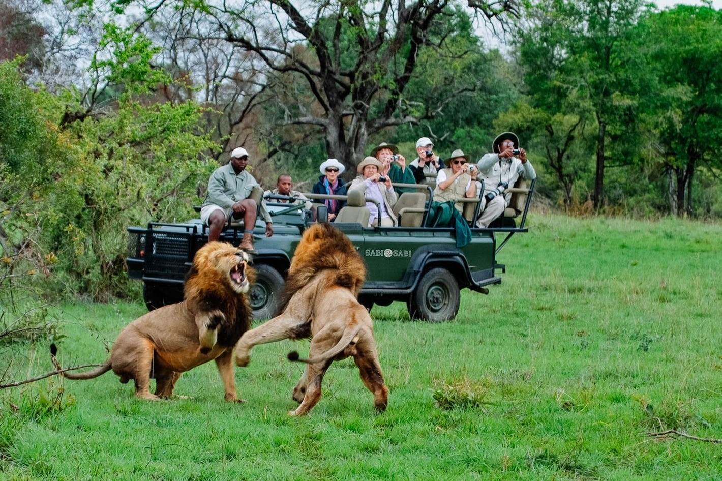 """""""مباشر من محمية"""" في جنوب أفريقيا: الحيوانات في منزلك!"""
