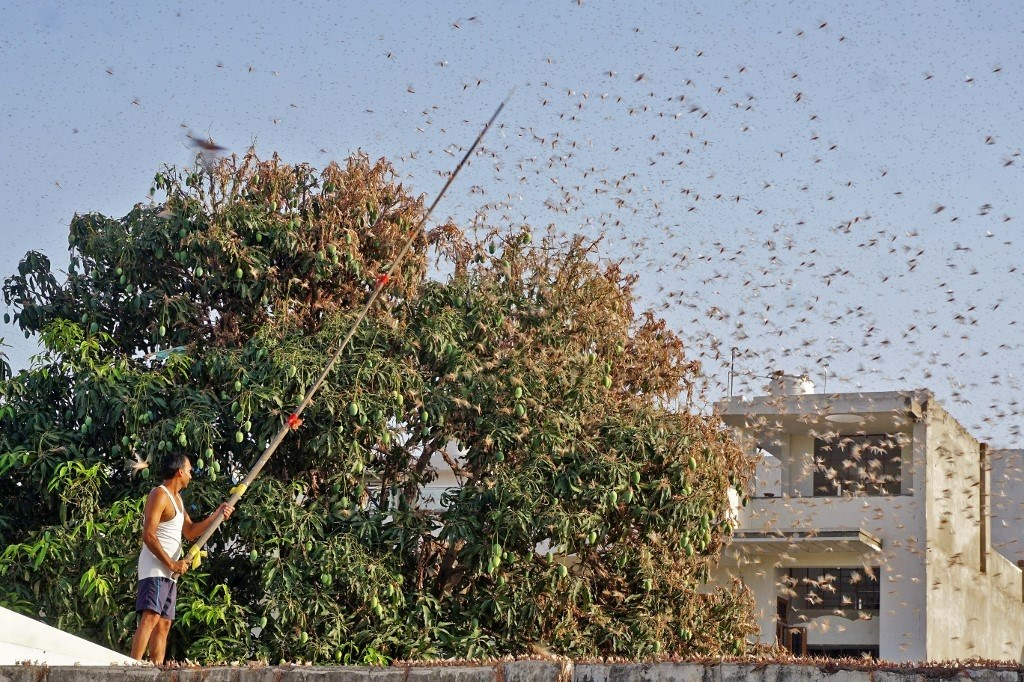 ملايين الحشرات تخرج من باطن الأرض قريباً.. والهند تواجه غزواً من الجراد
