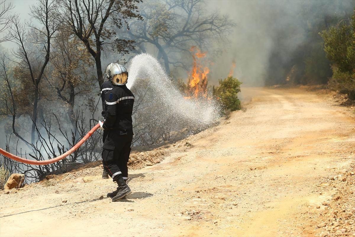 تونس: 723 حريقاً في أقل من شهر.. من يقف وراءها؟