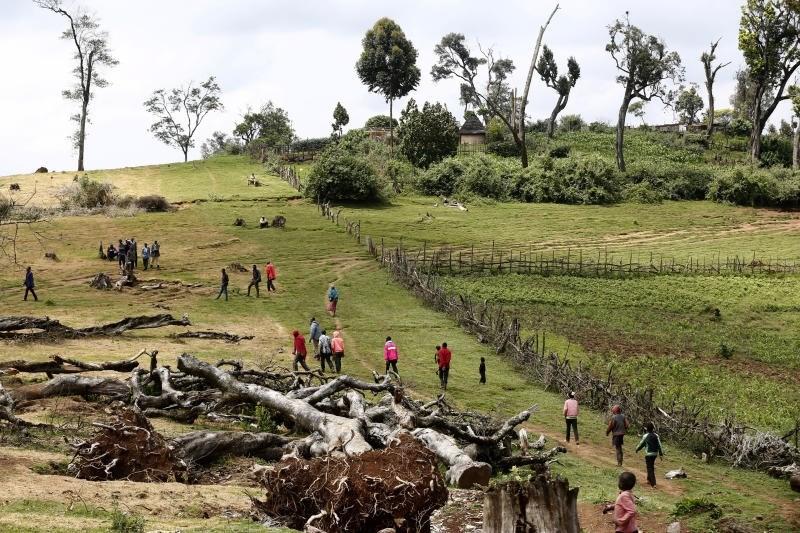 انحسار الغابات يتسارع في أفريقيا ويتباطأ في أميركا الجنوبية