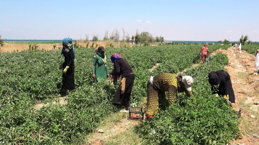 الحكومة السورية بدأت خطة شاملة لدعم القطاع الزراعي في البلاد