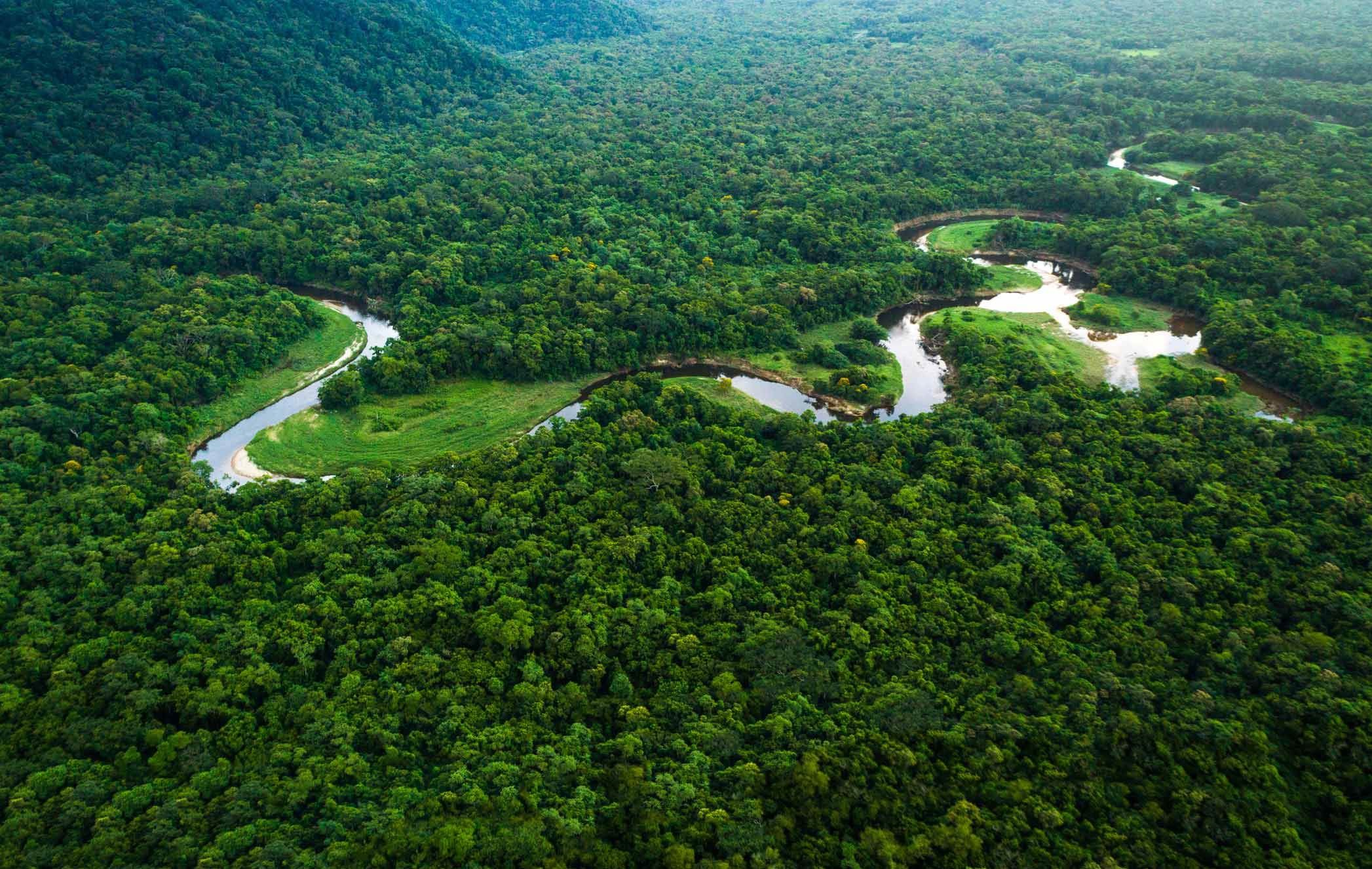 مستوى قياسي في قطع أشجار الأمازون خلال النصف الأول من الـ2020