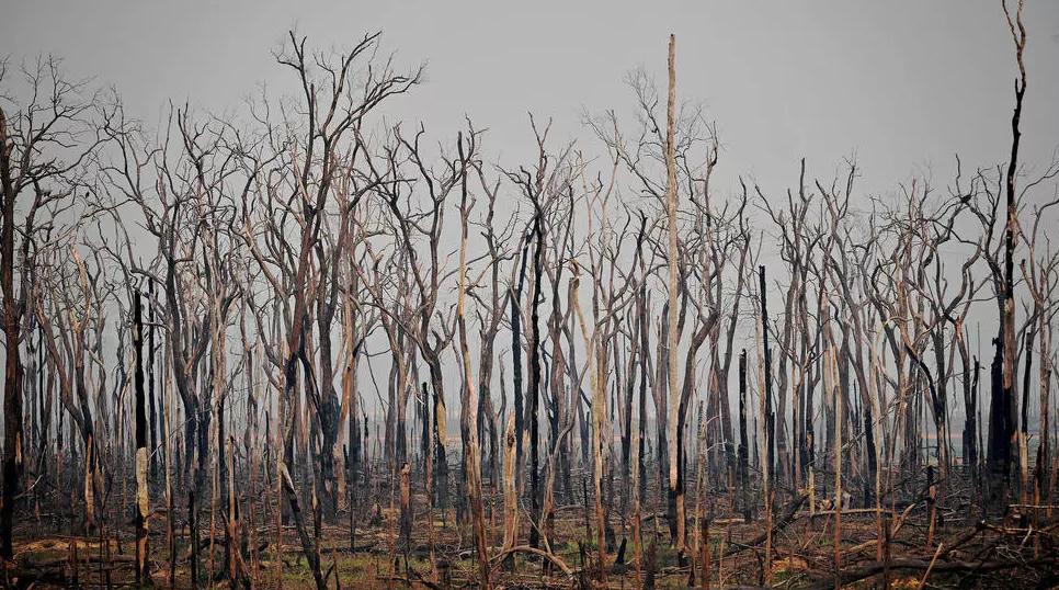 أشجار متفحمة في غابة الأمازون بالقرب من أبونا في ولاية روندونيا في البرازيل في 24 آب/أغسطس 2019 (أ ف ب)