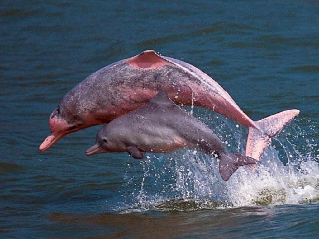 عالمة البحار: أعداد الدلافين في تلك المنطقة ازدادت بنسبة تصل إلى 30% منذ آذار/ مارس