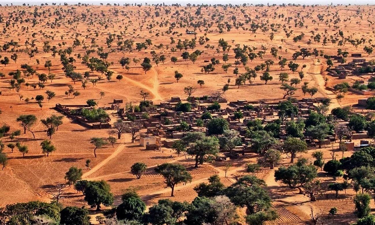 منظر جوي للأشجار في الصحراء.