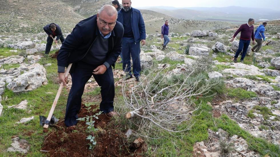 فلسطينيون يعيدون زرع أشجار اقتلعتها اسرائيل في الضفة الغربية المحتلة